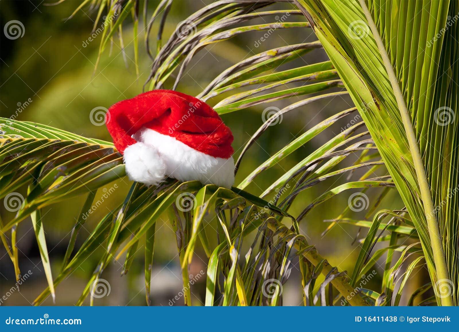 Red Santa s hat hanging on palm tree