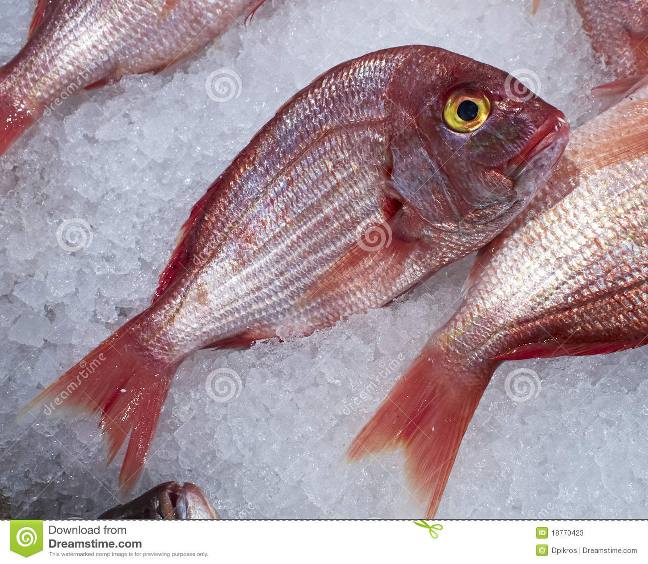 Red sea bream fish stock image image of healthy catch for Red sea fish