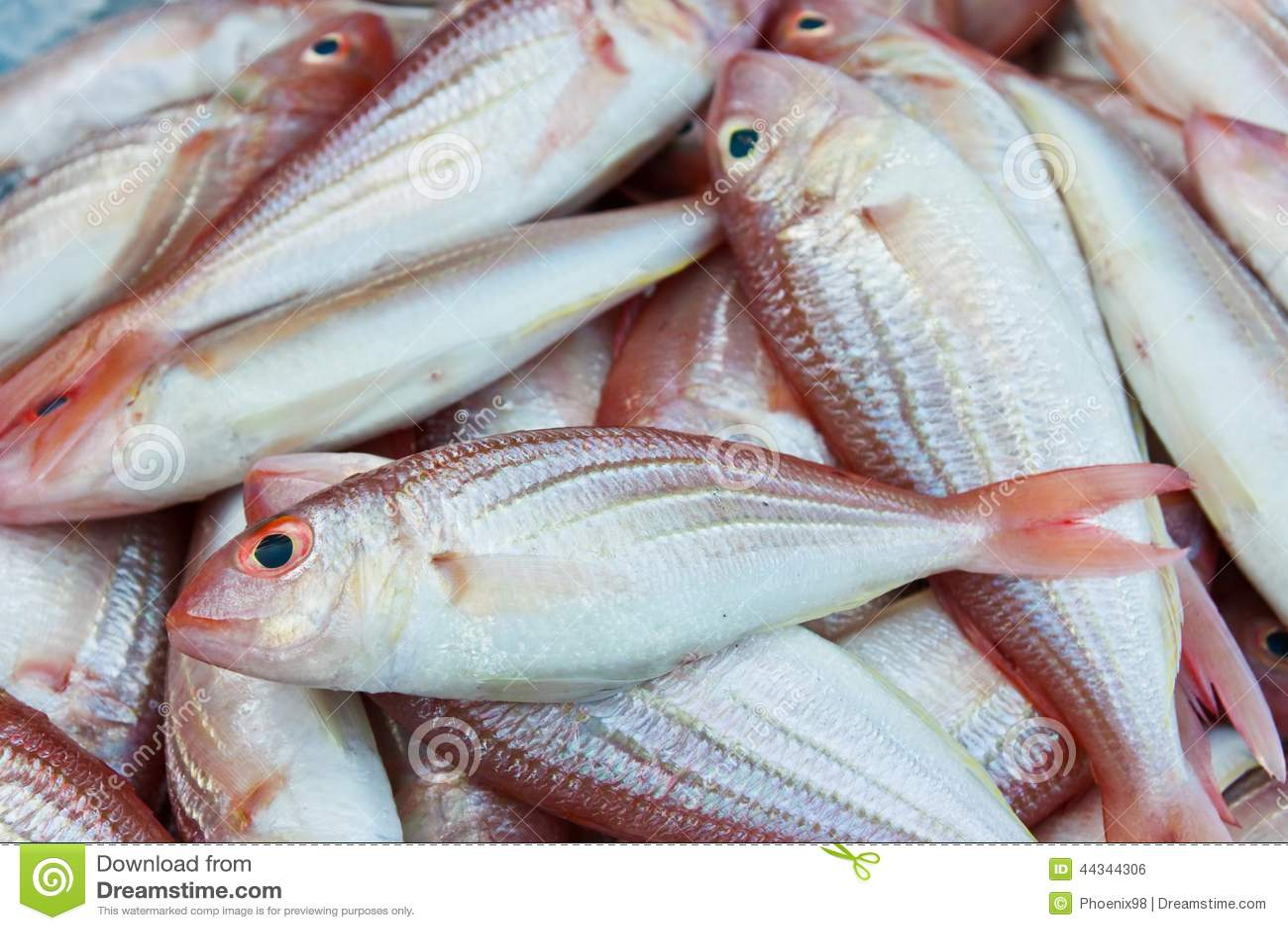Red sea bream fish