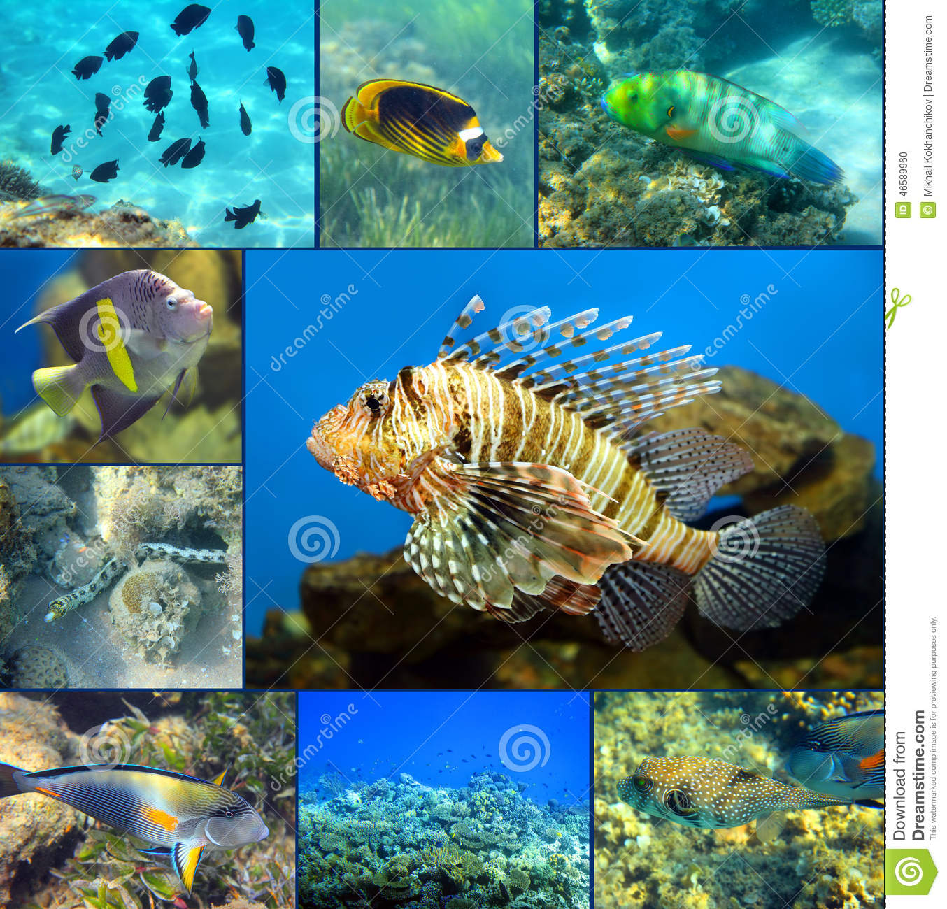 Red sea coral fish set stock photography cartoondealer for Red sea fish