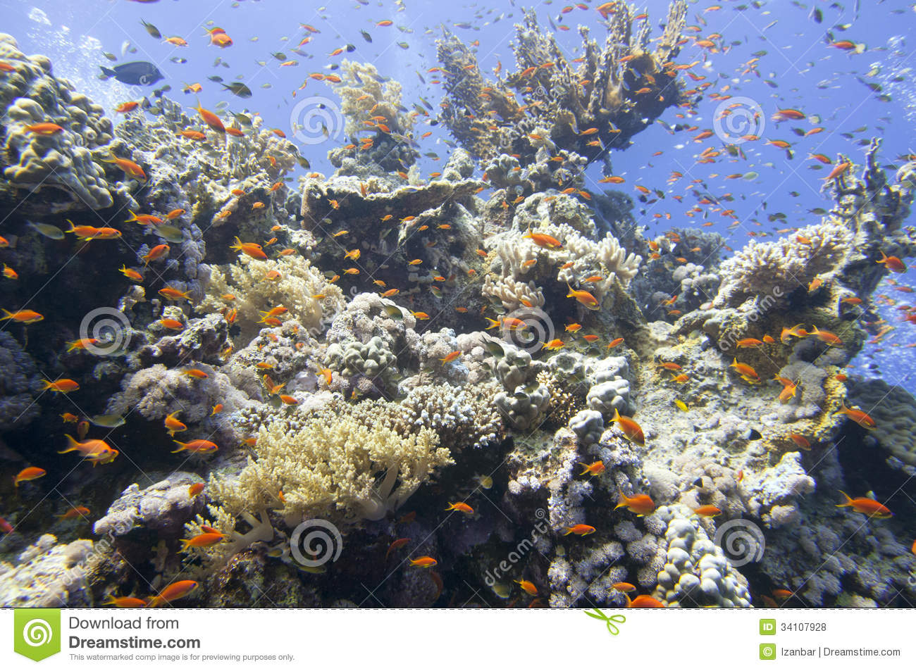 Royalty free stock photos red sea corals house for fishes