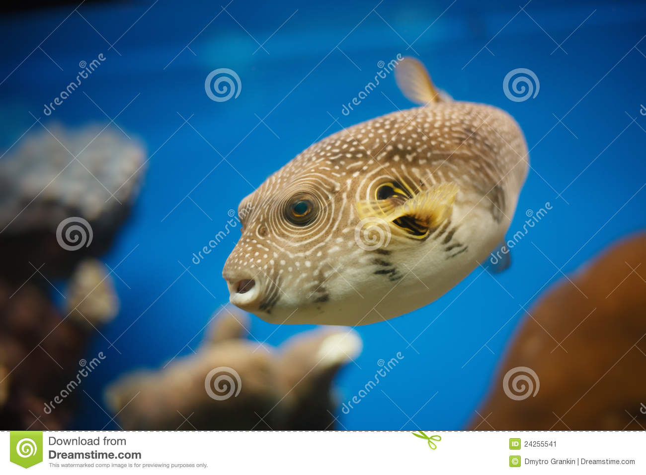 Red sea fish stock image image 24255541 for Red sea fish