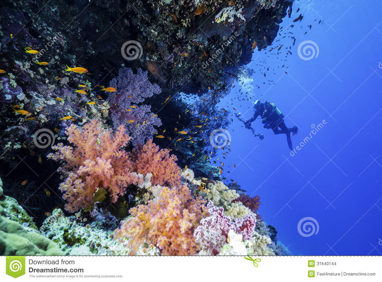 Stock images red sea reef with a underwater photographer