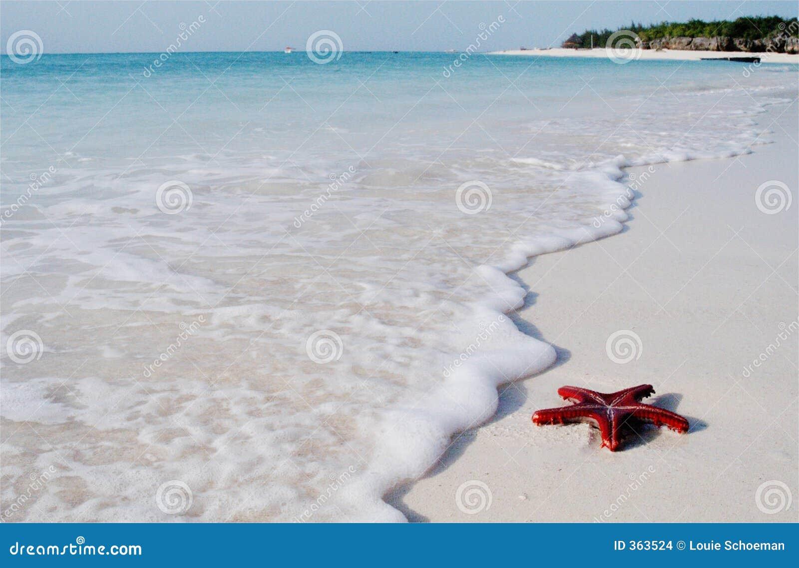 Red sea star on Zanzibar Island