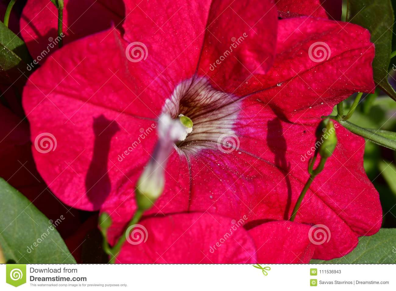Red Color Of Flowers At Spring Time Stock Image - Image of smaller ...