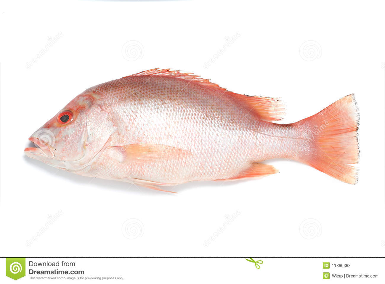 Red snapper fish stock photos image 11860363 for Is a fish wet