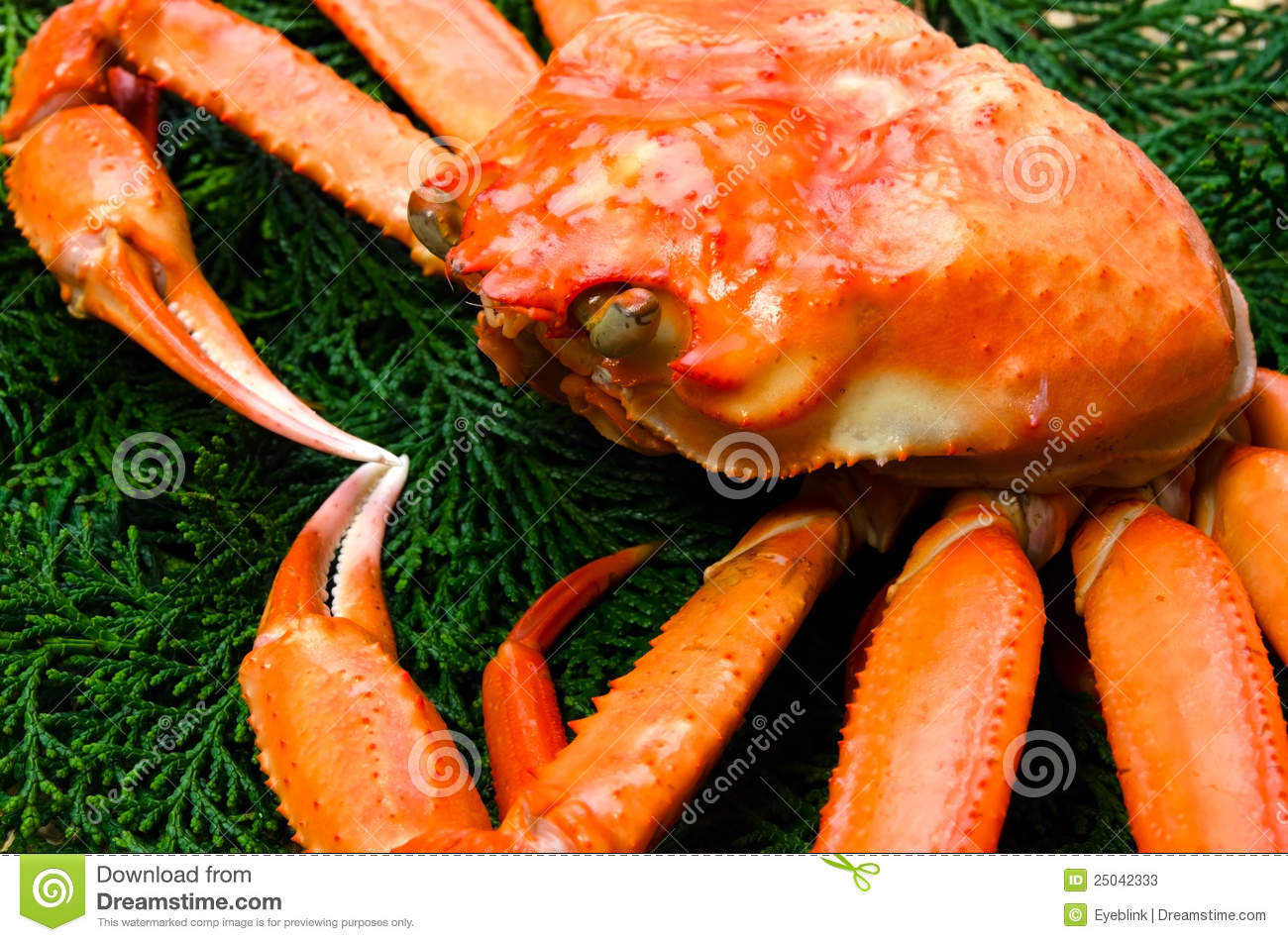 Pictures Of Red Snow Crab 117