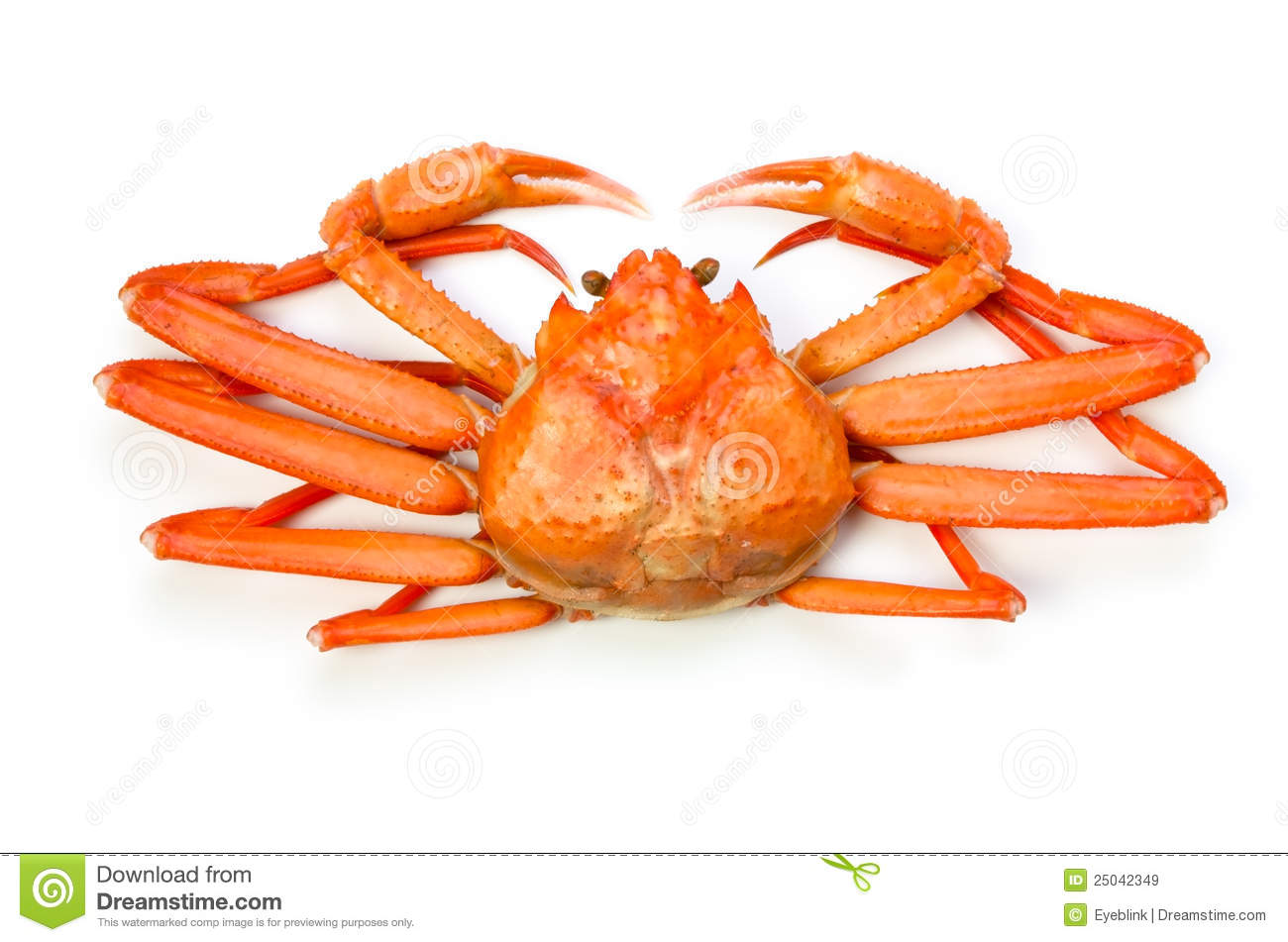 Pictures Of Red Snow Crab 51