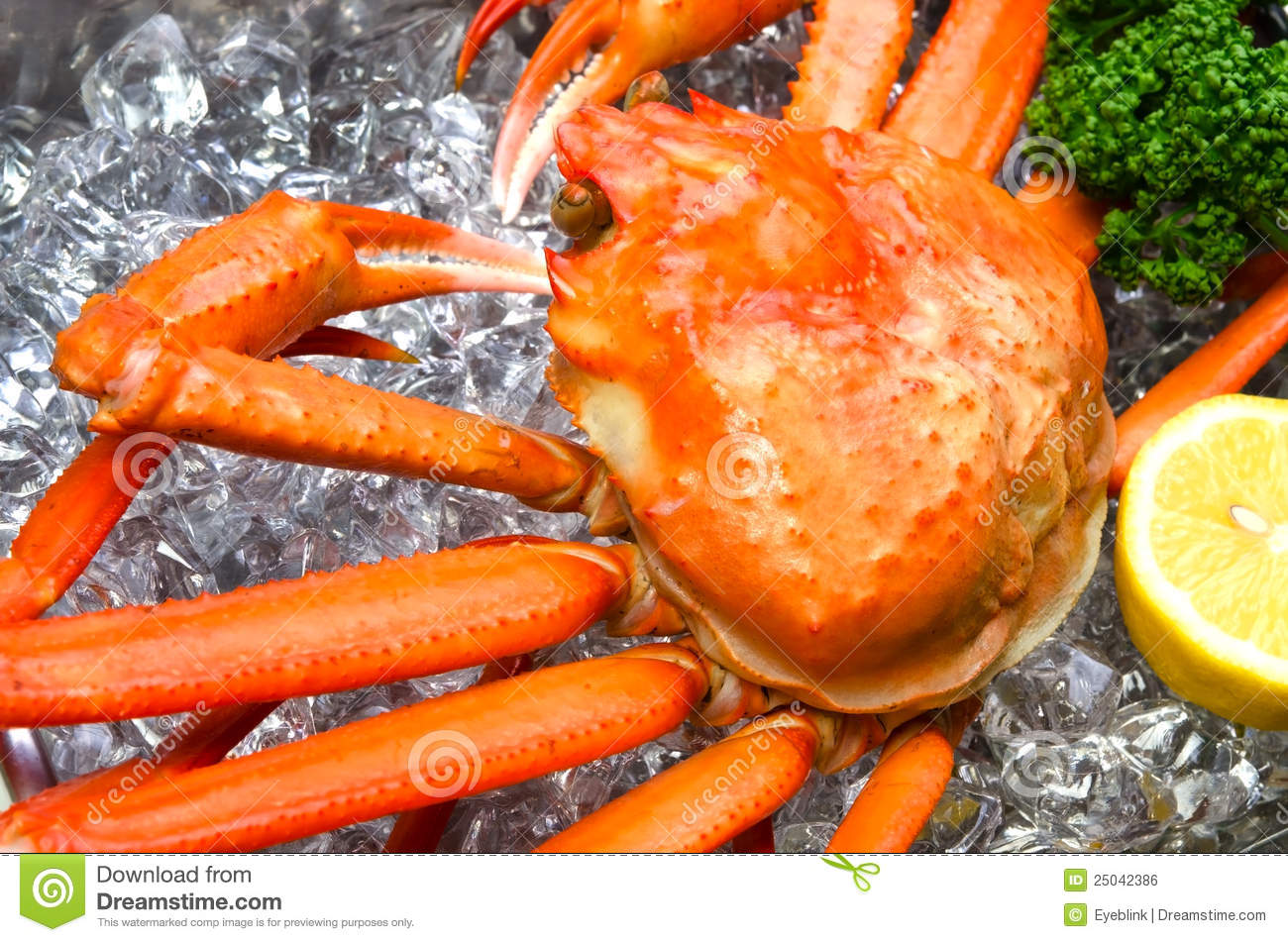 Pictures Of Red Snow Crab 14
