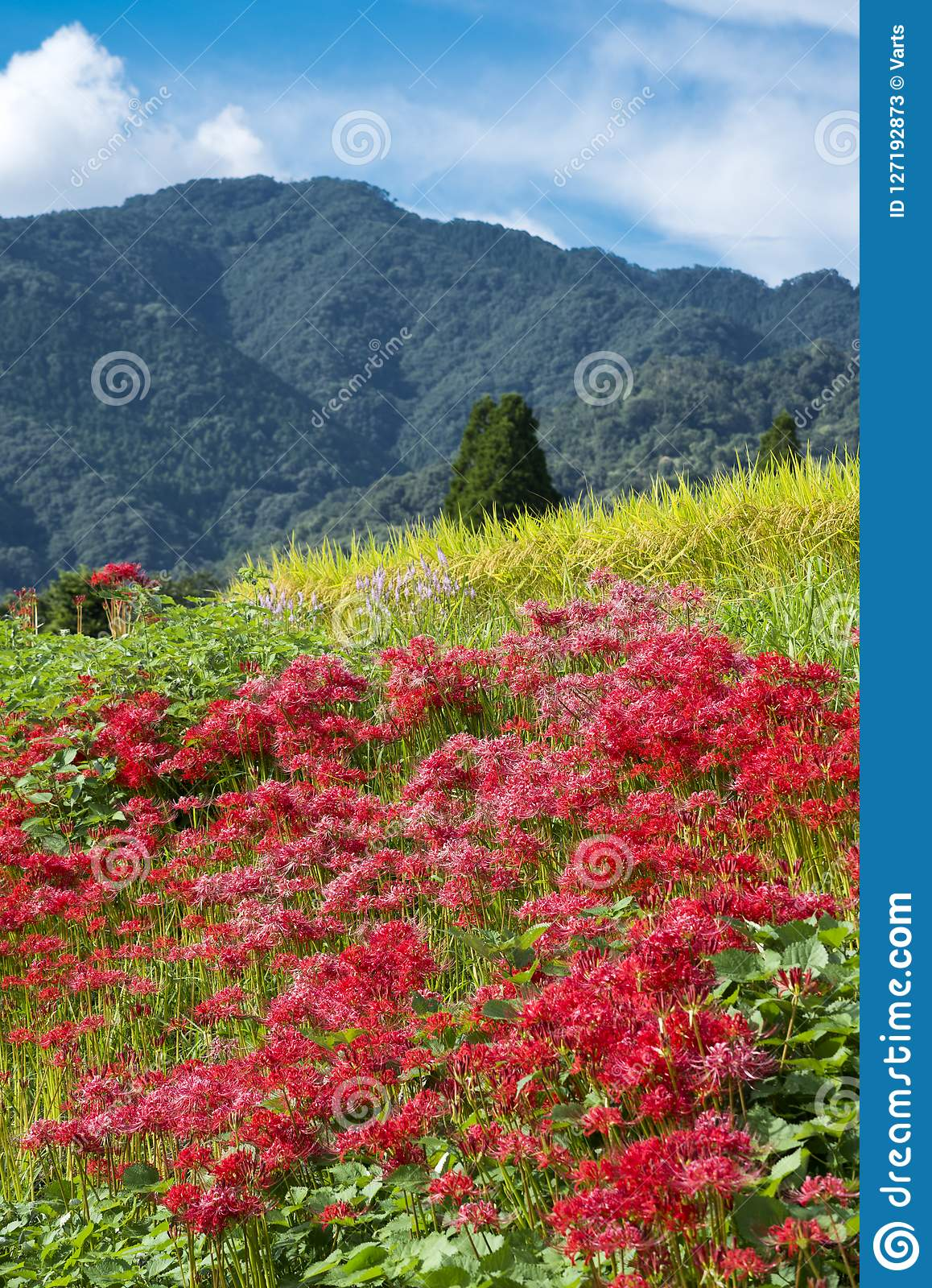 Red flowers and mountain