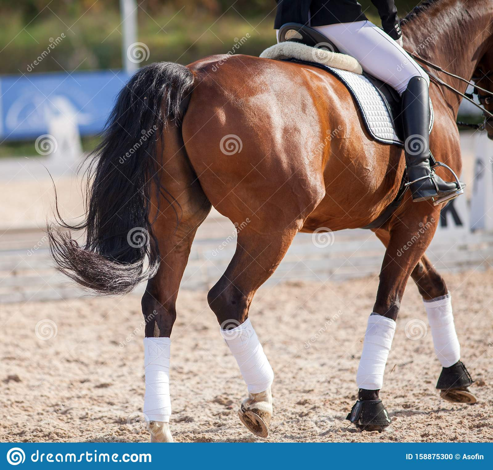 A Red Sports Horse With A Bridle And A Rider Riding With His Foot In A Boot With A Spur In A Stirrup Stock Photo Image Of Black Ride 158875300