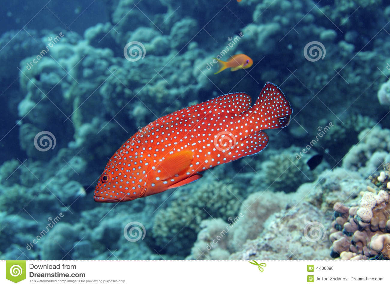 Red Spotted Fish stock photo. Image of animal, color, orange - 4400080