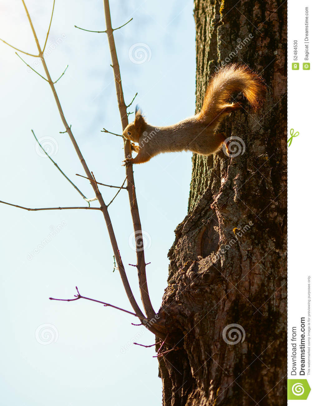 squirrel and tree relationship