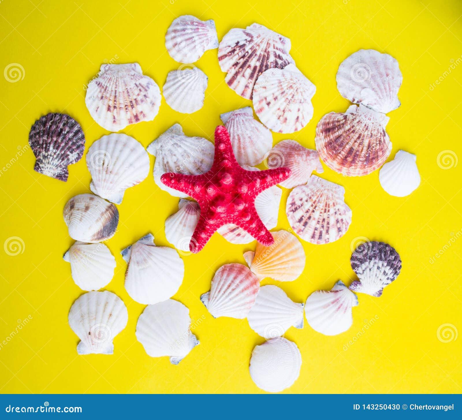 Red starfish and white seashells on yellow background