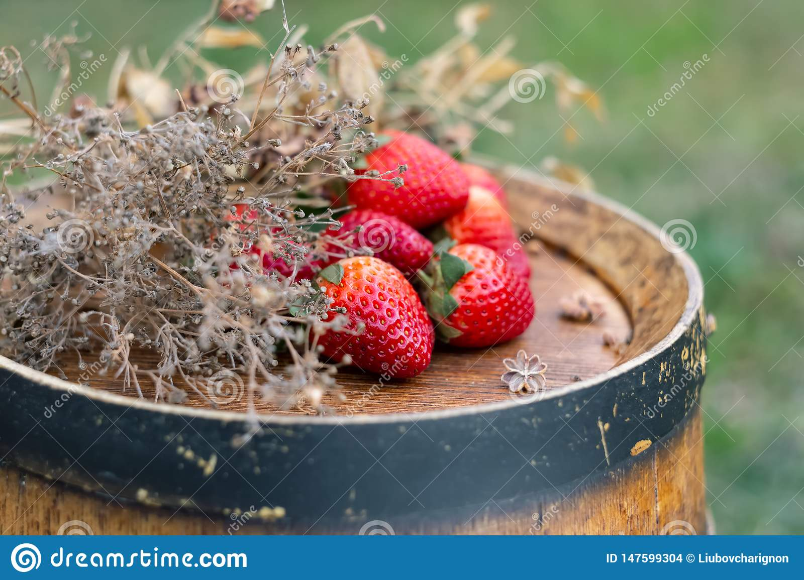 Red strawberries, dry grass on a wooden wine barrel in the garden in springtime.