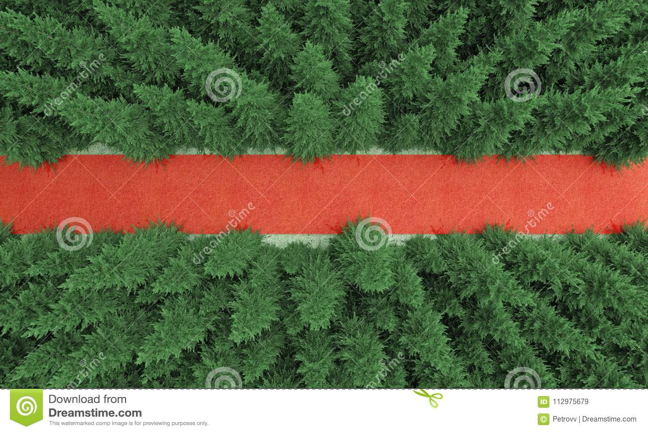 Red strip in a spruce forest top view