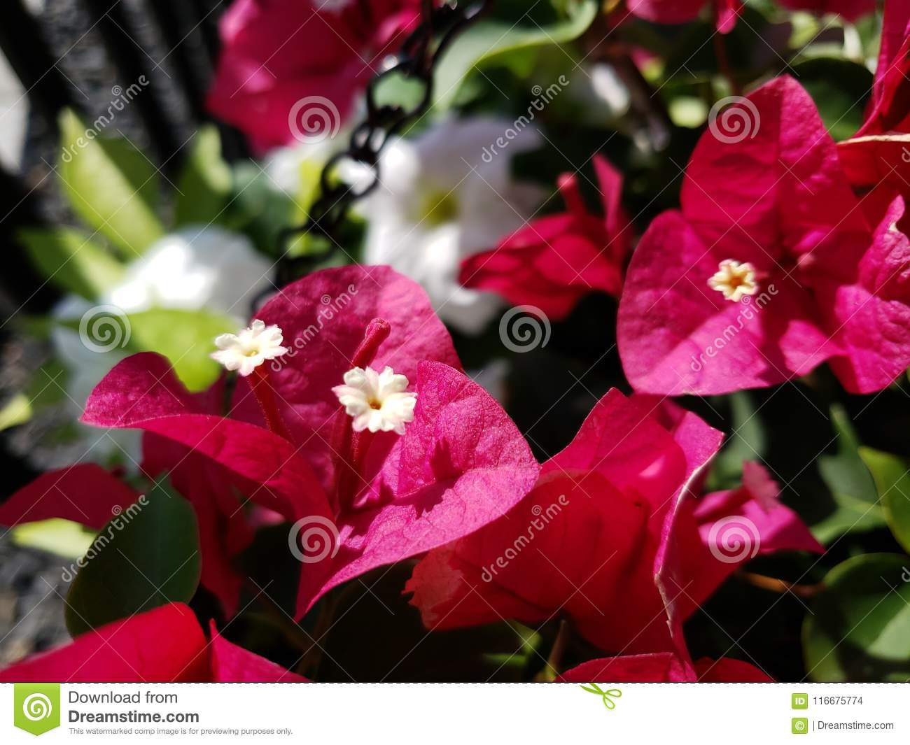 Red Summer Stock Photo Image Of Summer Tiny Flowers 116675774