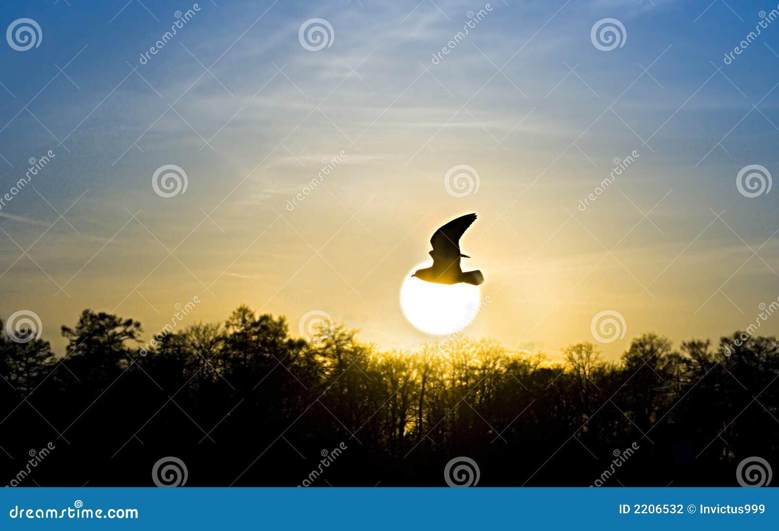 Red sunset. bird and sun