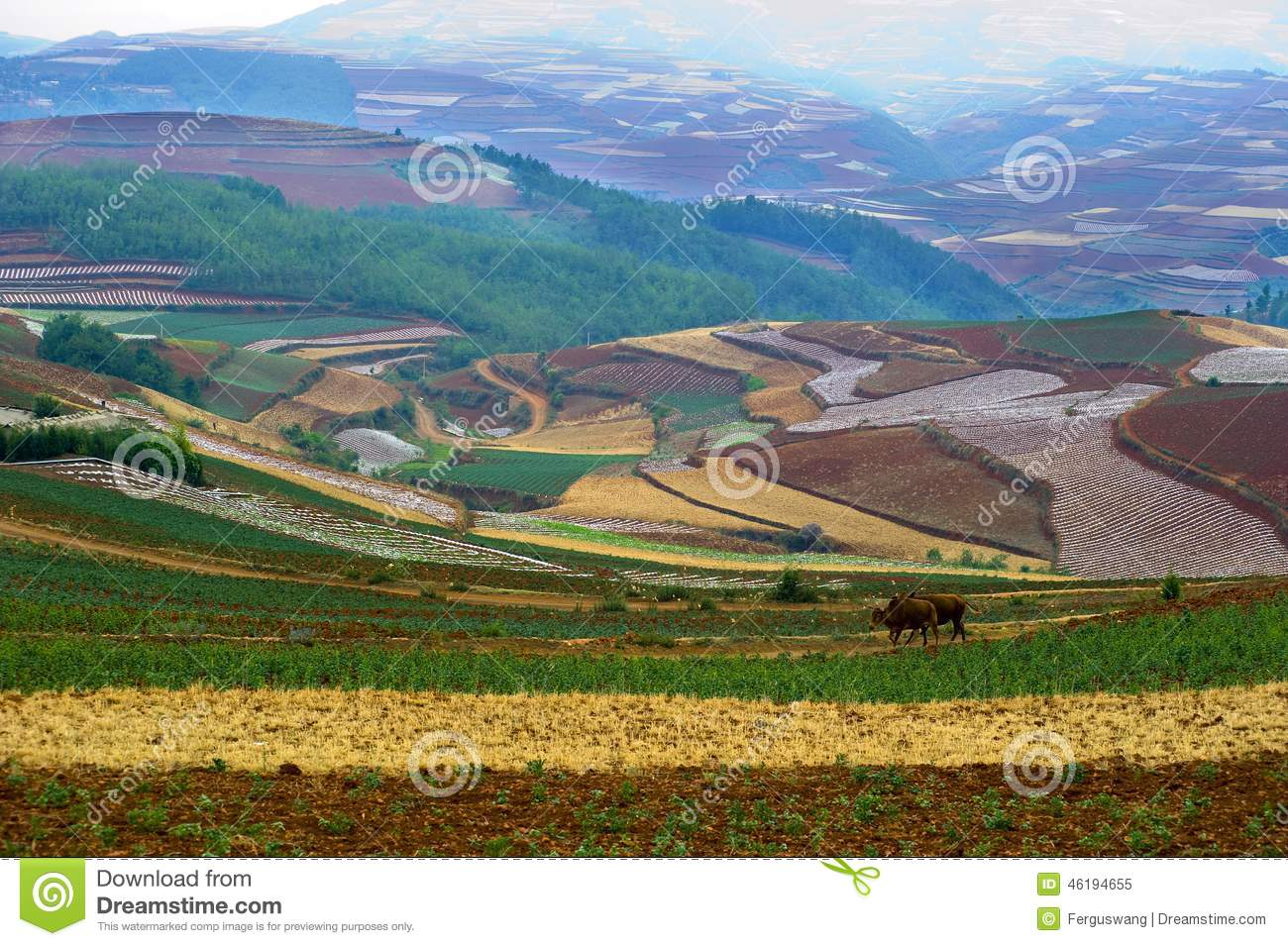 The red terrace of yunnan china stock photo image 46194655 for Terrace landform