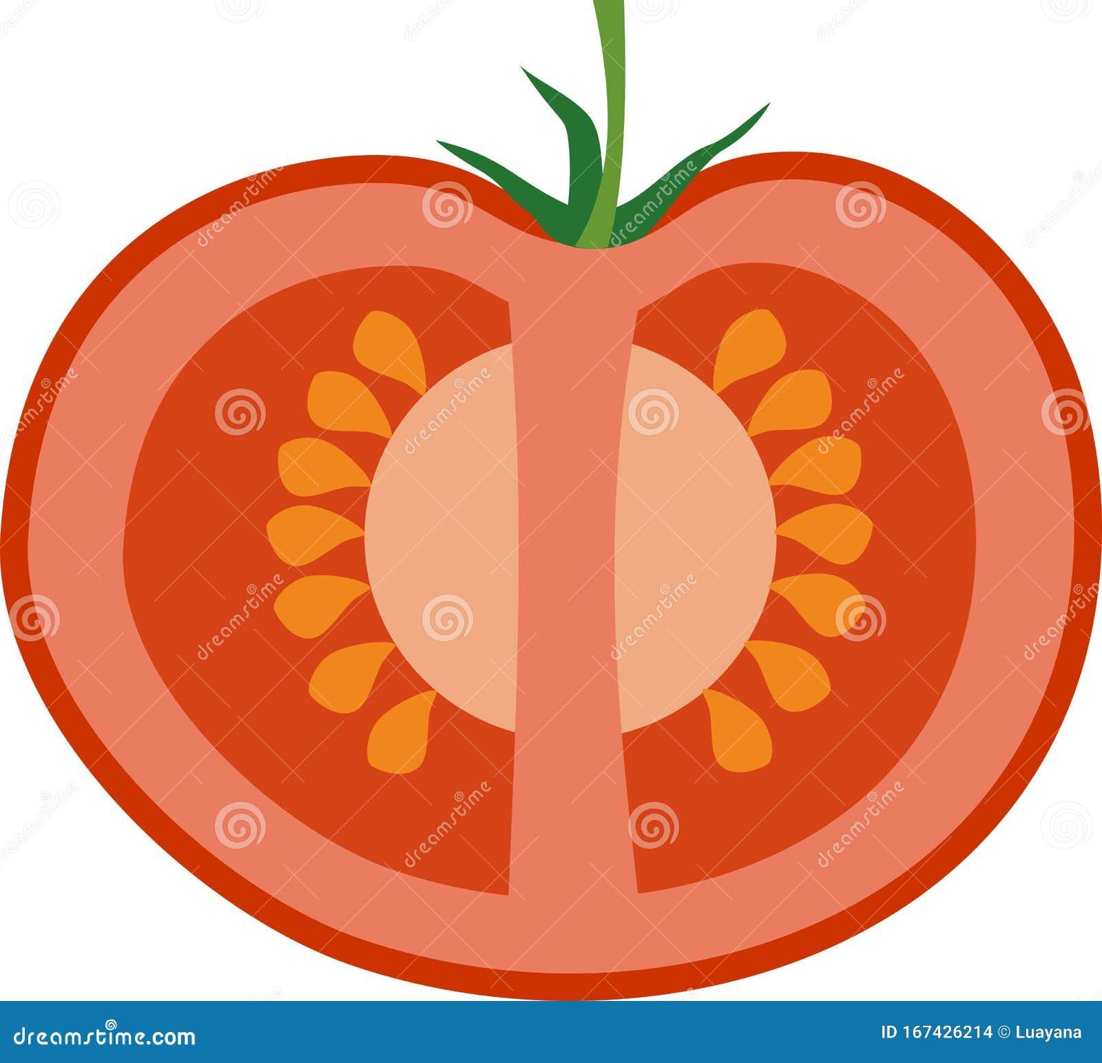 Tomato Cross Section Stock Illustrations – 138 Tomato Cross Section Stock  Illustrations, Vectors & Clipart - DreamstimeDreamstime.com