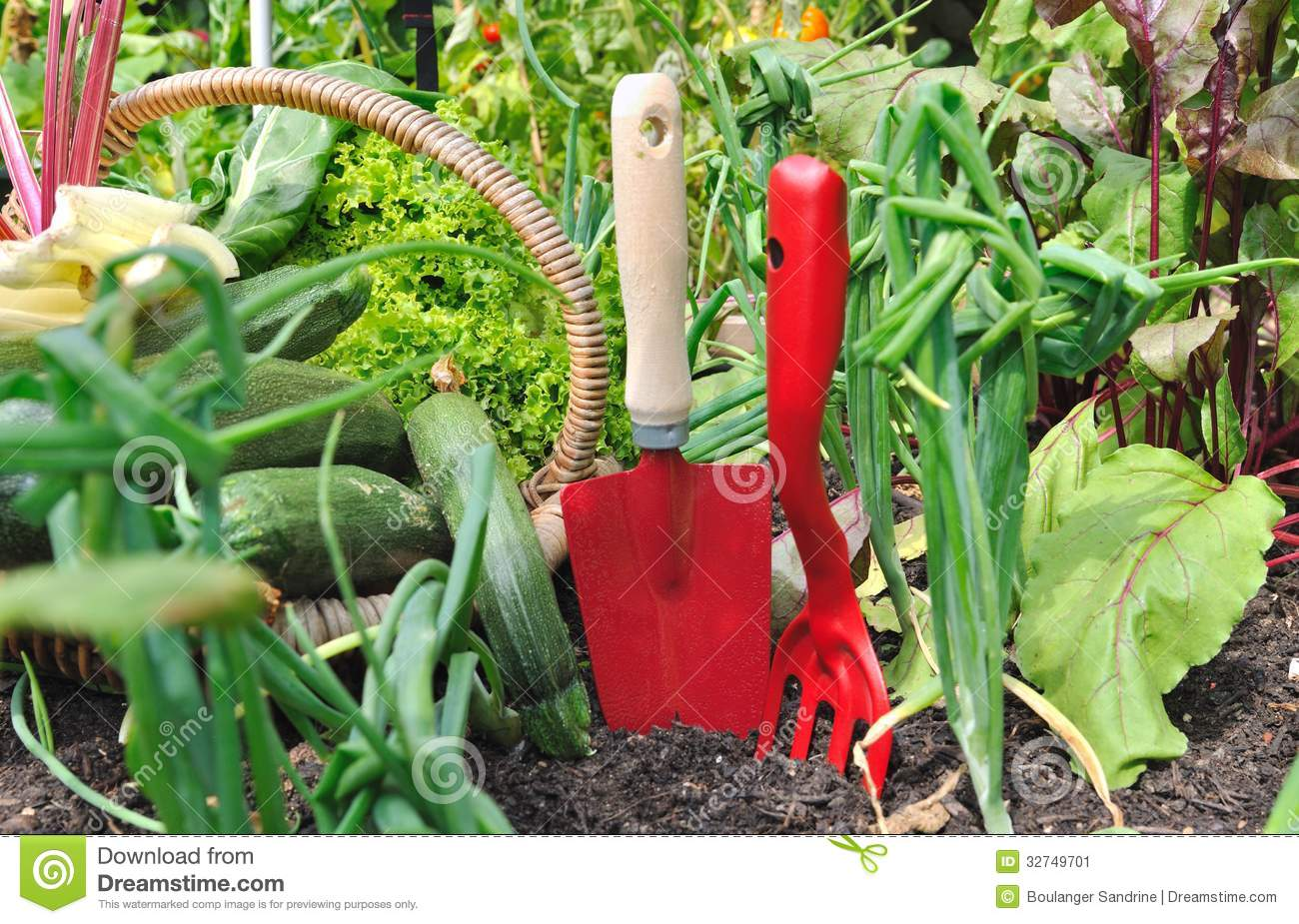 Red tools and vegetables stock image image 32749701 for Vegetable garden tools