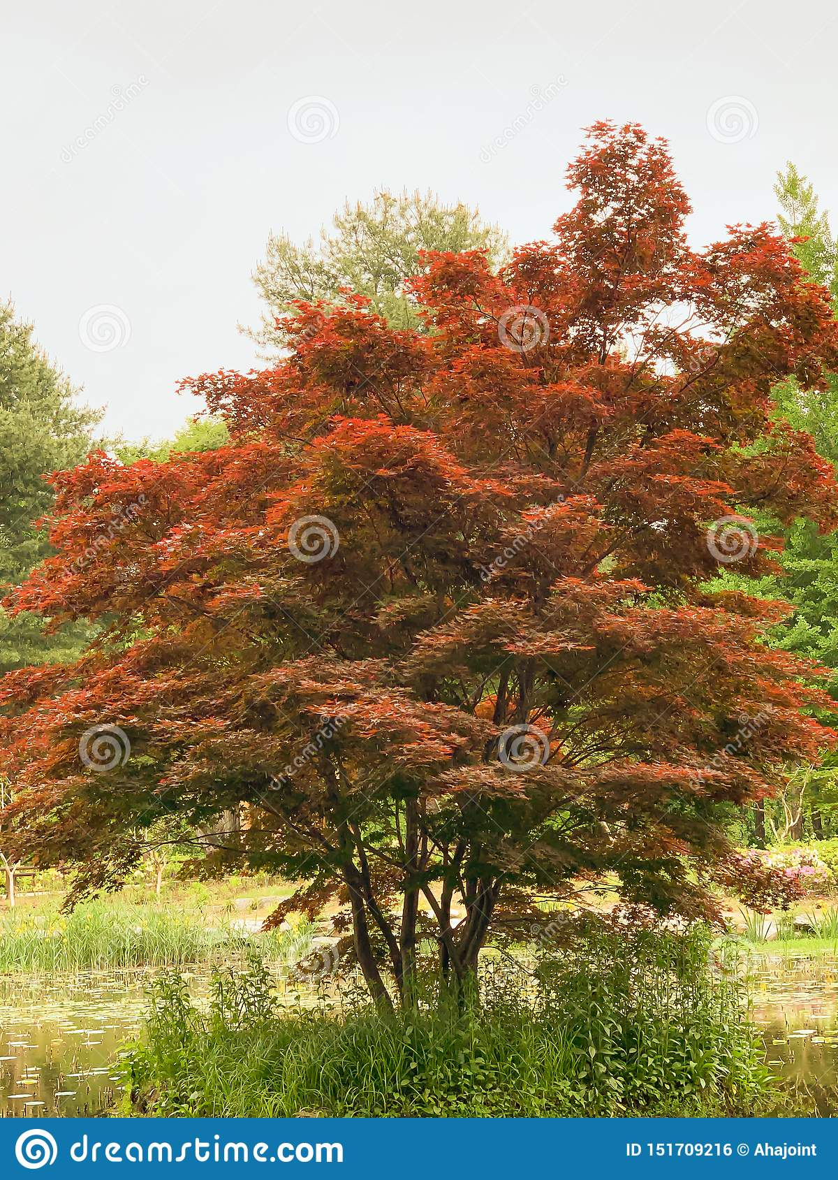 Red tree in the park