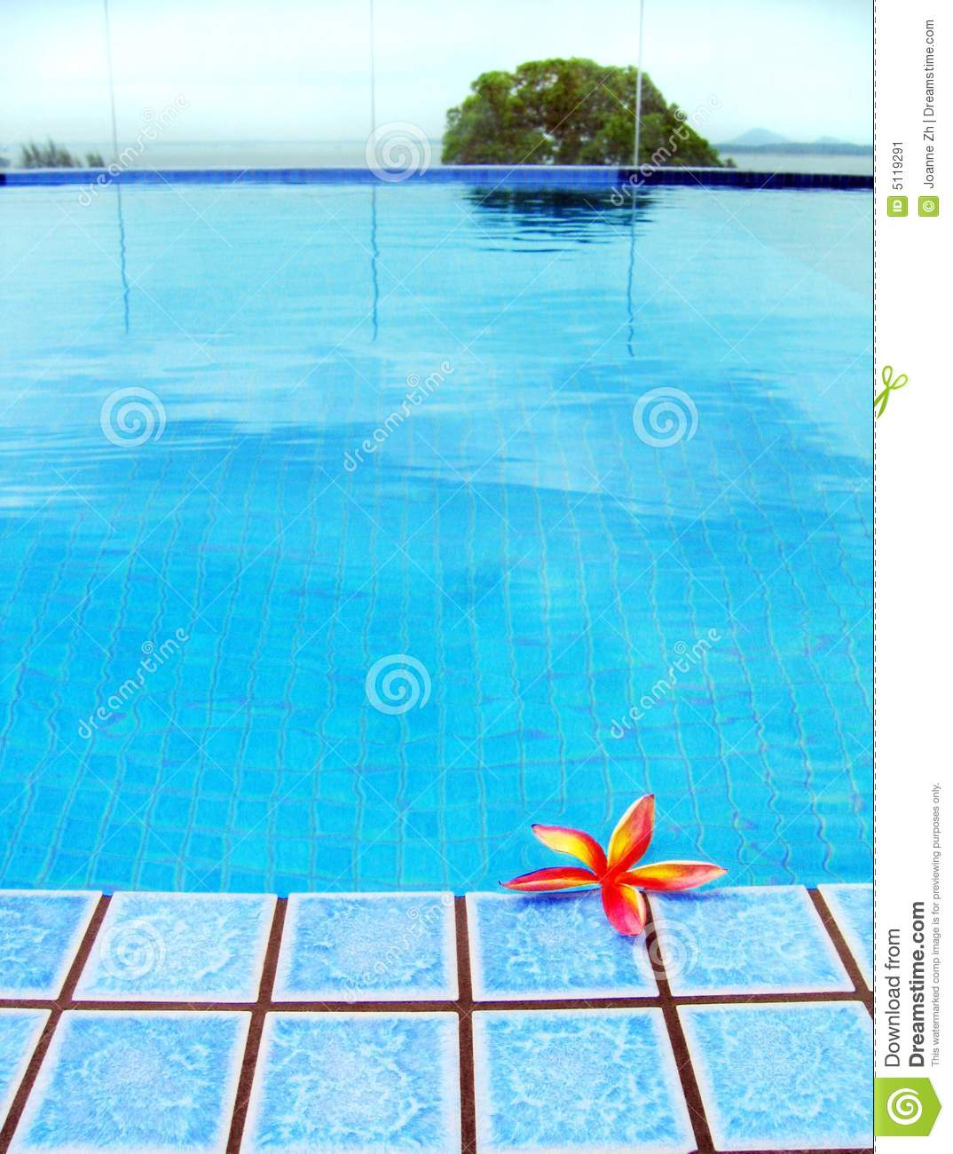 Red Tropical Flower Blue Resort Swimming Pool Stock Image