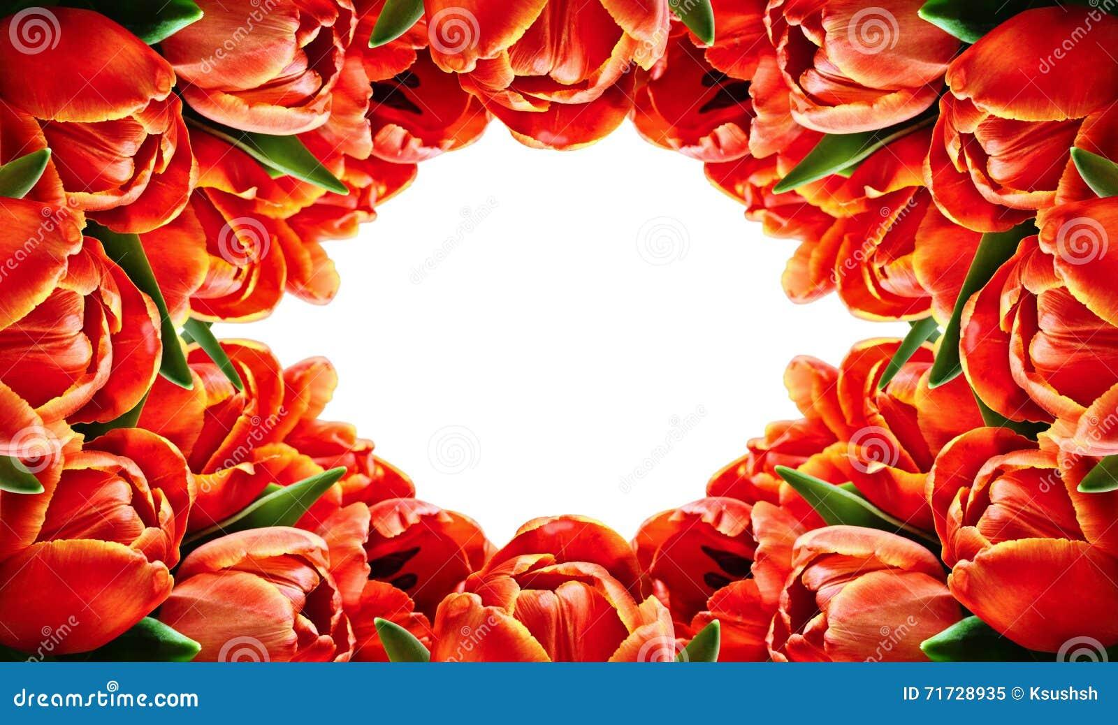 Red tulip flowers horizontal frame