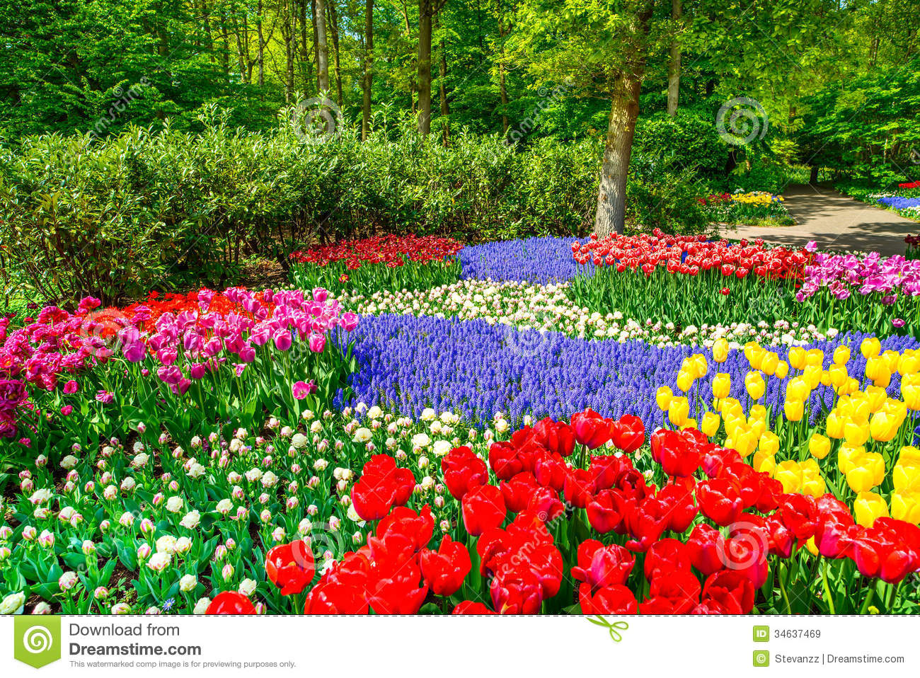 Red Tulip Garden In Spring Background Or Pattern Royalty Free Stock ...