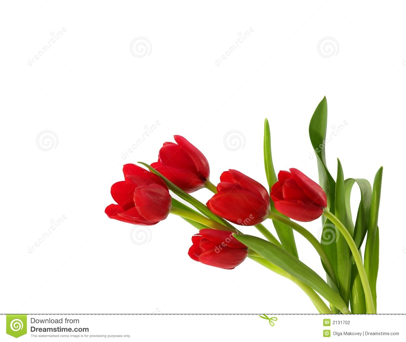 Red Tulips Stock Photography - Image: 2131702