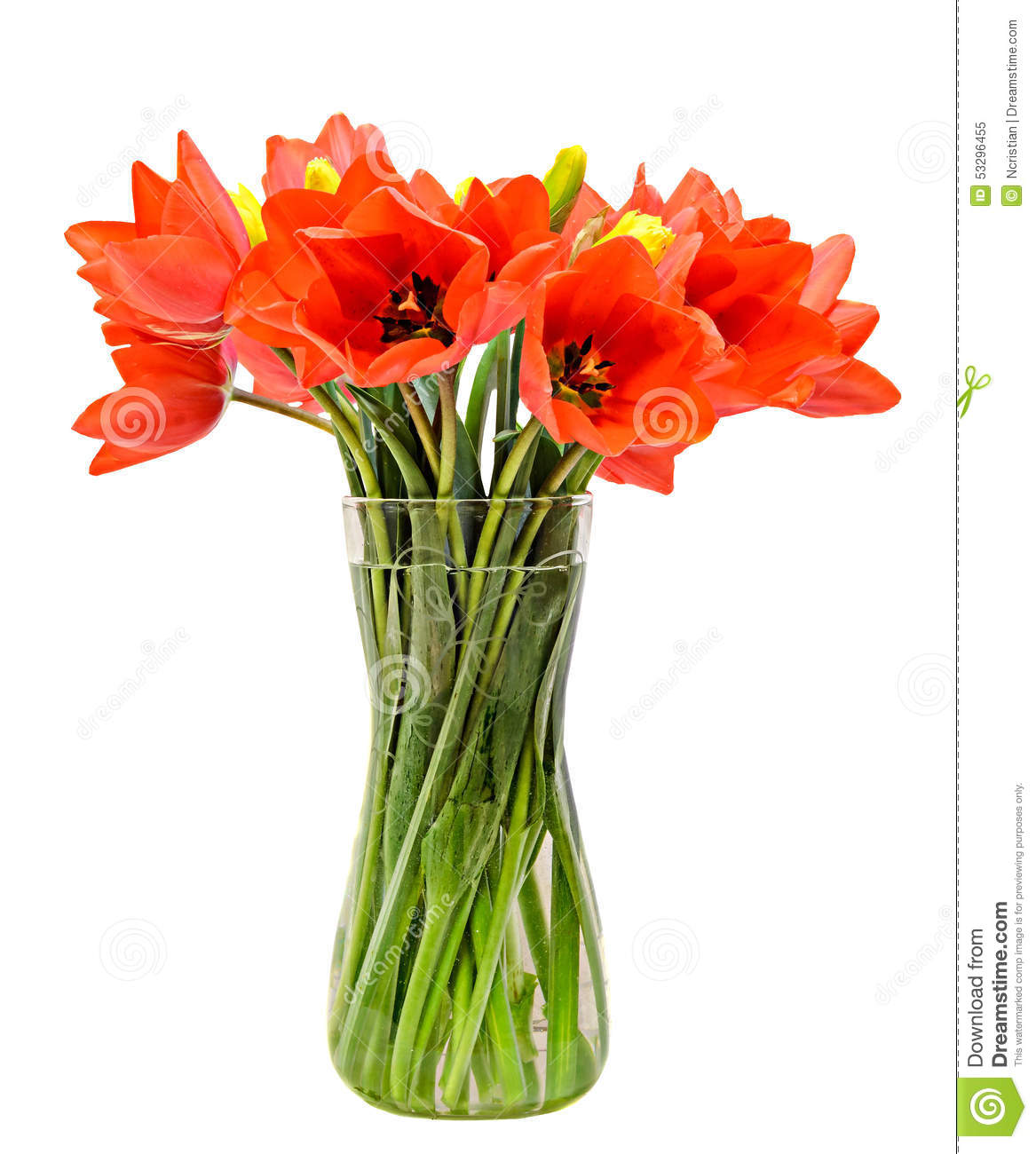 Red tulips flowers, floral arrangement (bouquet), in a transparent ...