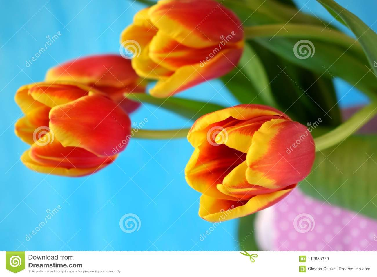 Red tulips in a present bag