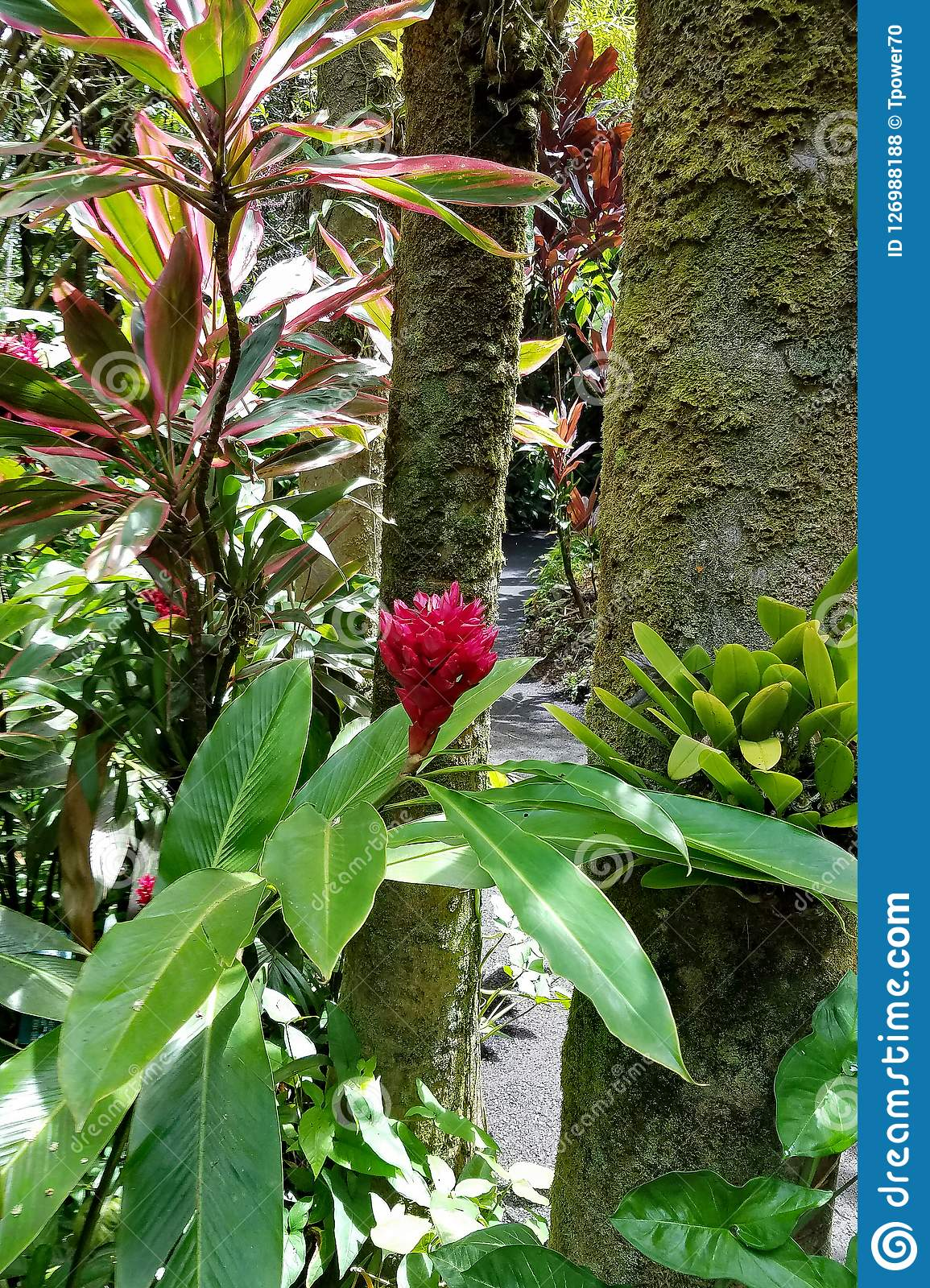 Red Wax Ginger Plant and Tall Trees