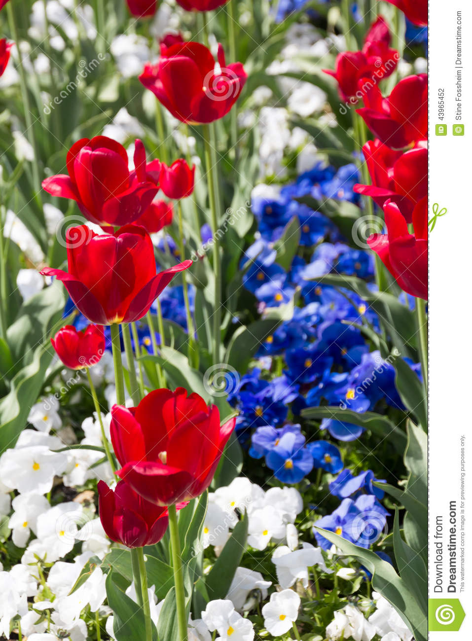 Red white and blue stock photo image of easter backdrop 43965452 red white and blue izmirmasajfo