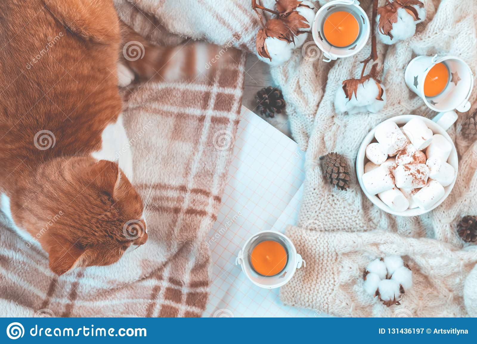 Red white cat on plaid, cup of coffee, cotton plant flower branches, notepad. Autumn winter beautiful background, cozy home