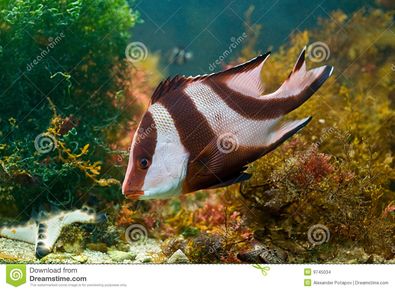 Red and white fish in green algae stock images image for White algae in fish tank