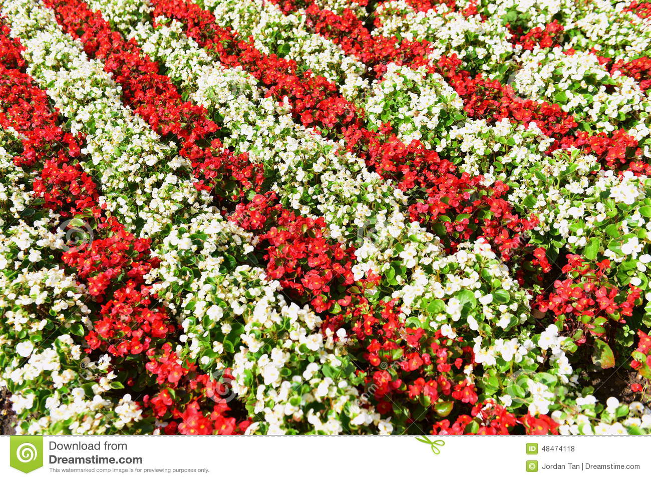 Red White Flower Bed Stock Photo Image Of Park Blossom 48474118