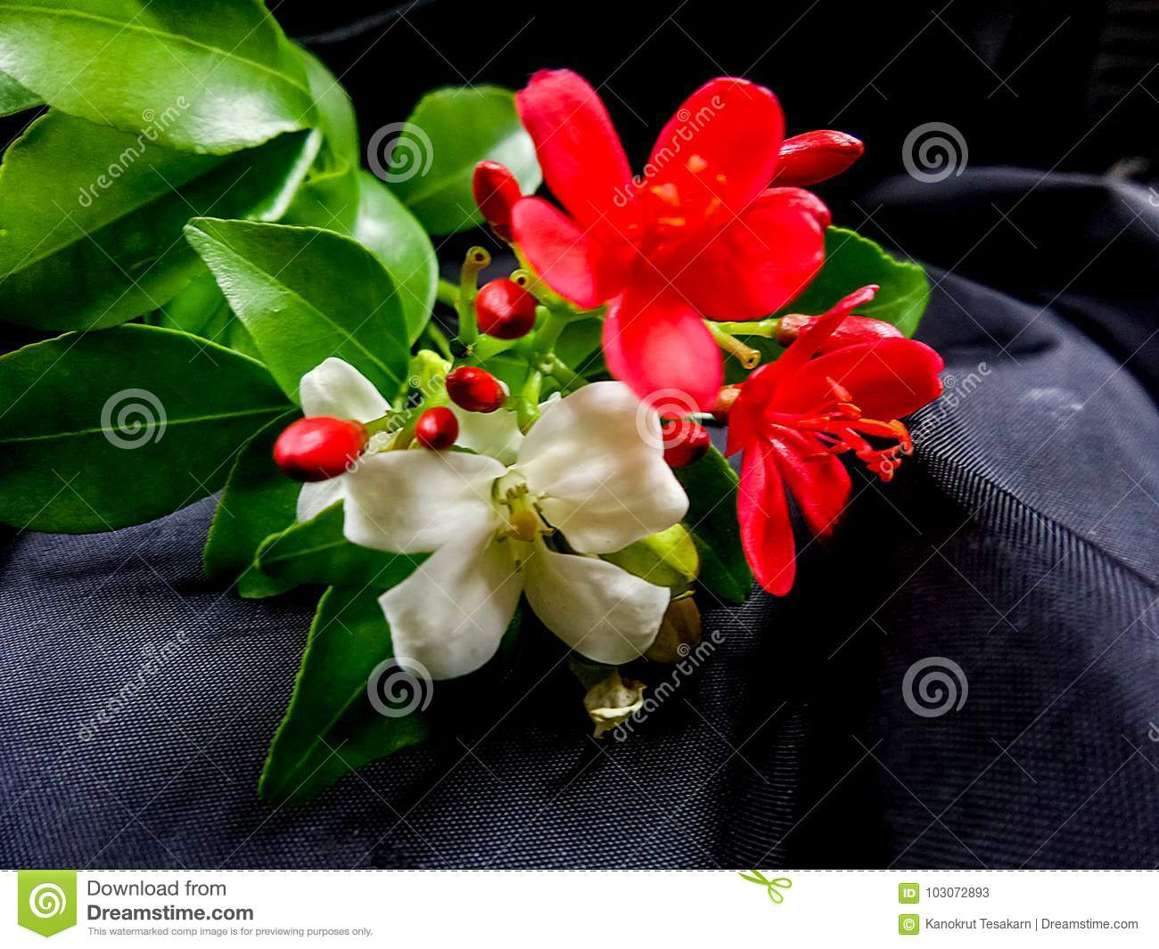 Red And White Flowers With Green Leaves On Black Backgroud Stock