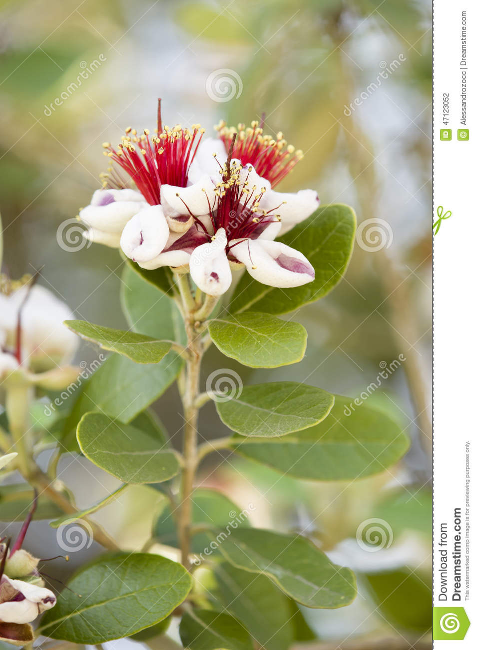 Red And White Flowers On A Tree Stock Photo Image Of Macro Detail
