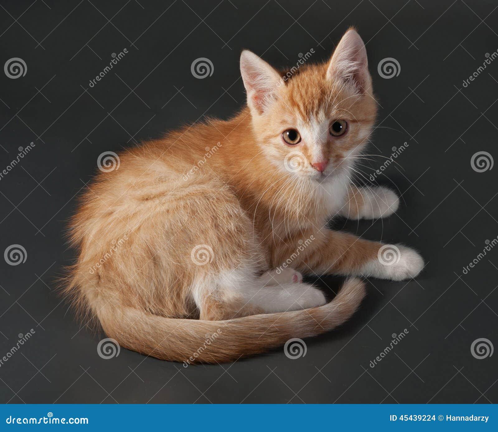 cat defense keychain