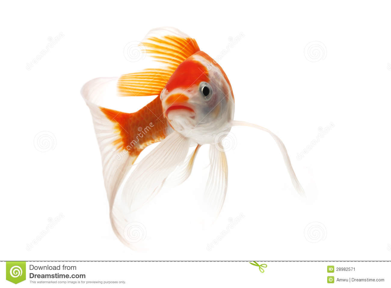 Red and white koi fish stock image image 28982571 for Red and white koi fish