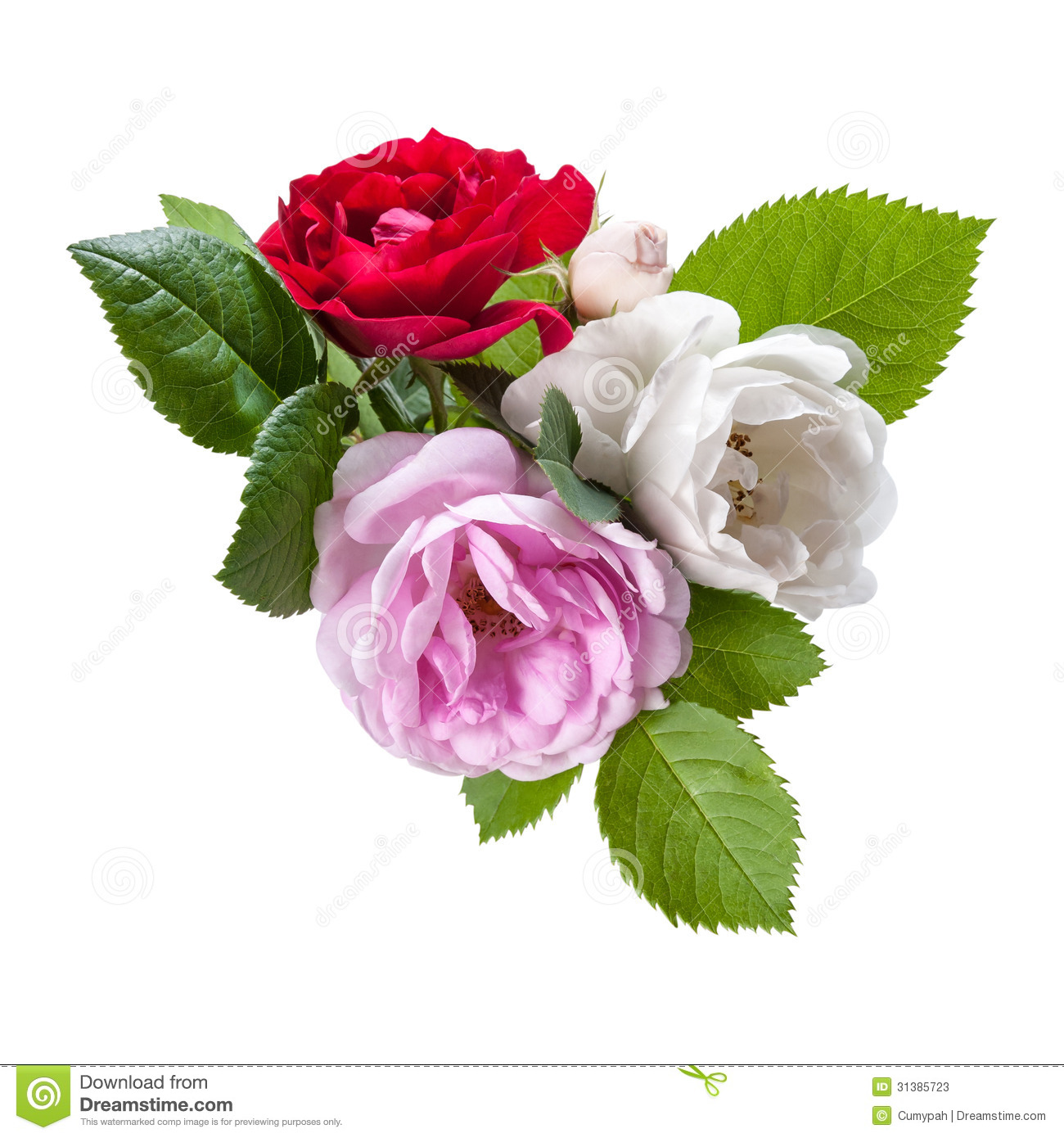 Red White And Pink Rose Flowers