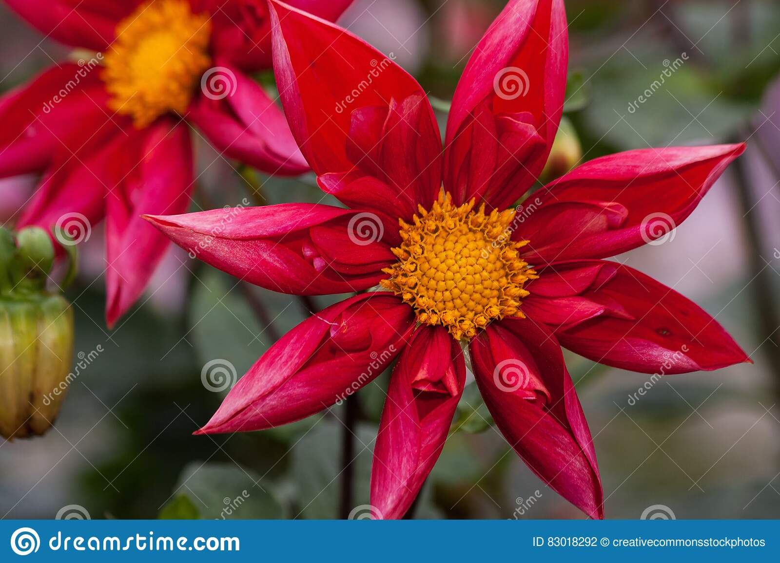 Download Red And Yellow Flower With Green Leaf Stock Photo - Image of flowers, free: 83018292