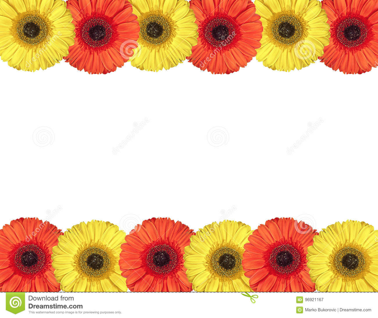 Red And Yellow Gerbera Flowers Create A Frame On White Stock Image ...