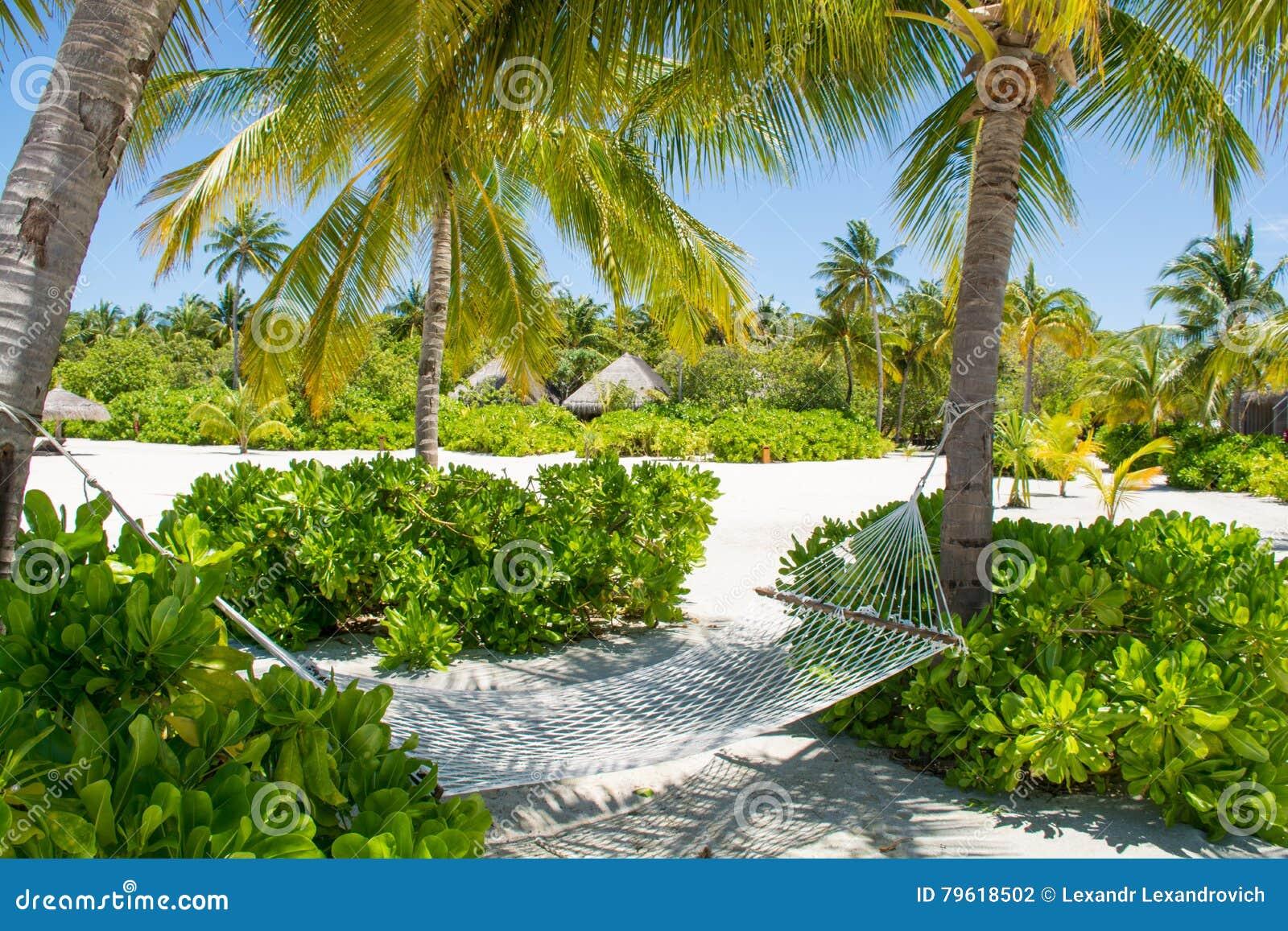 Rede confortável entre palmeiras na ilha tropical
