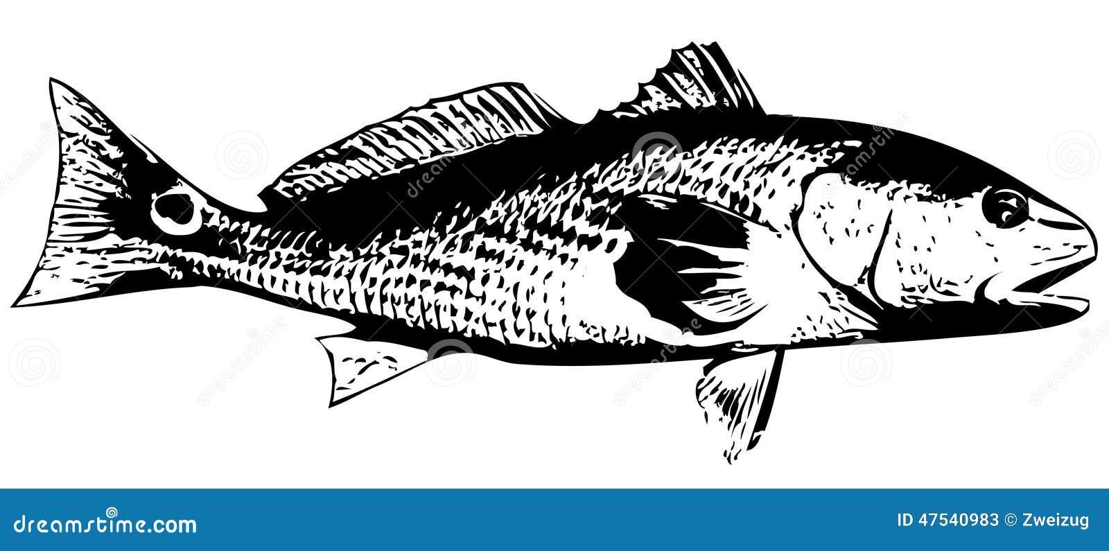 Redfish (красный барабанчик) удят - вектор