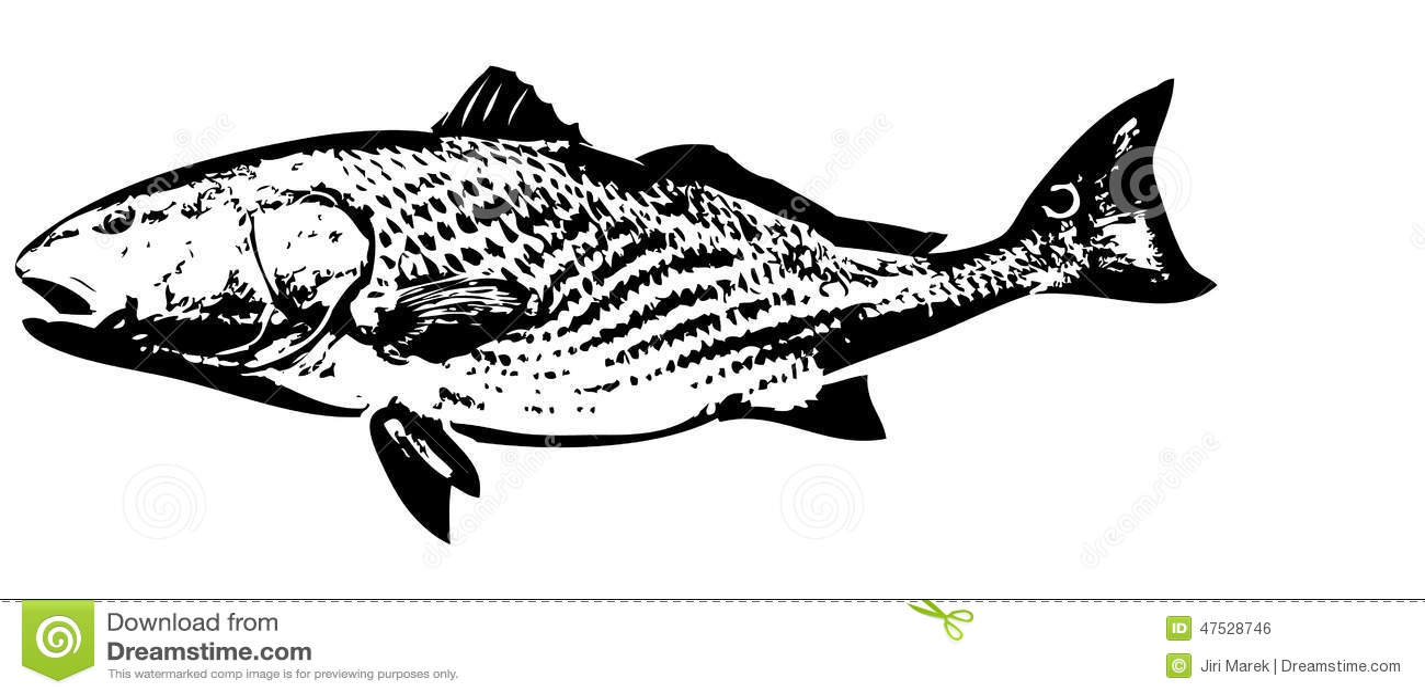 Redfish Fish Vector Stock Vector Illustration Of Fish 47528746