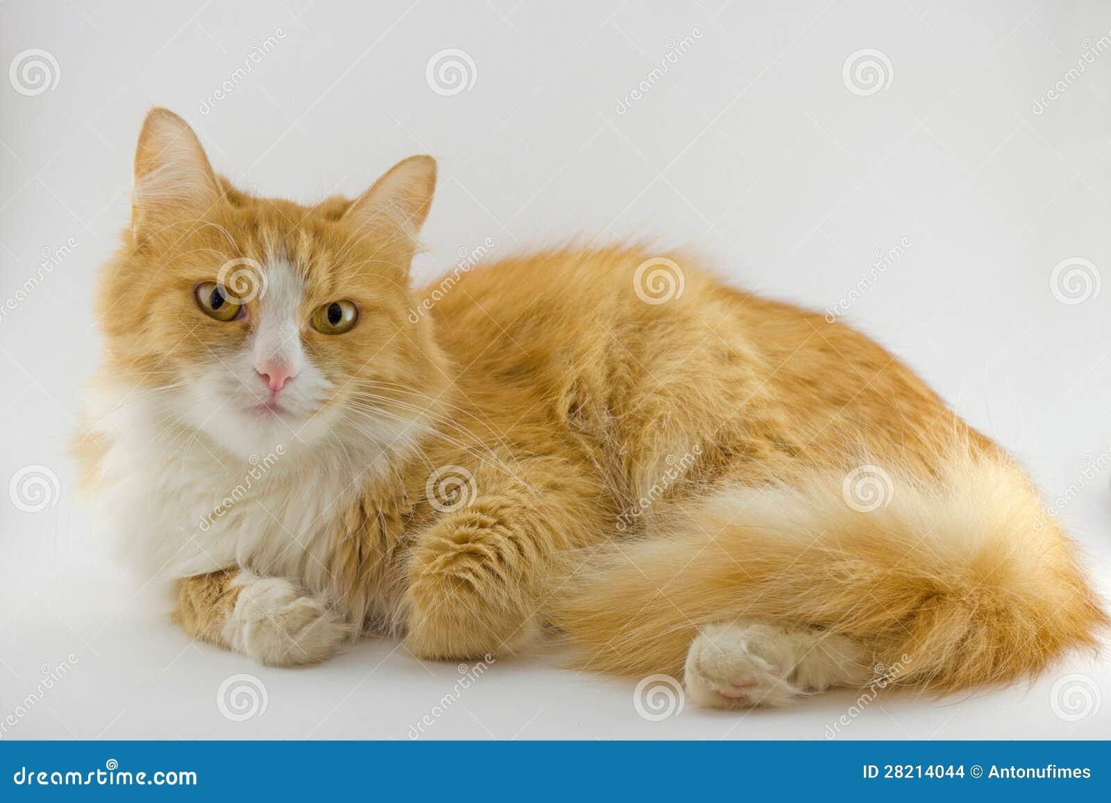 Redhead Kat 64