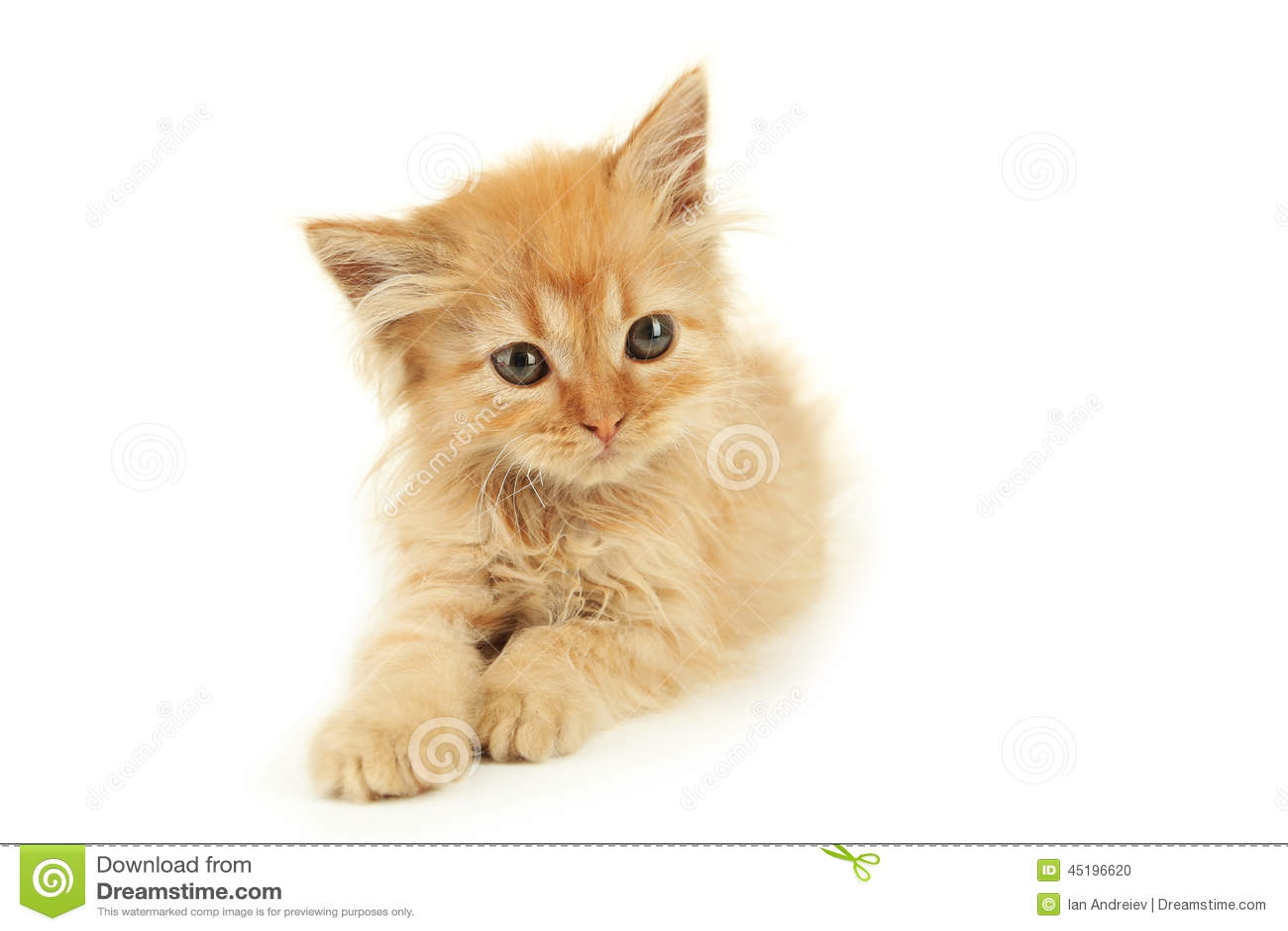 free kitten porn