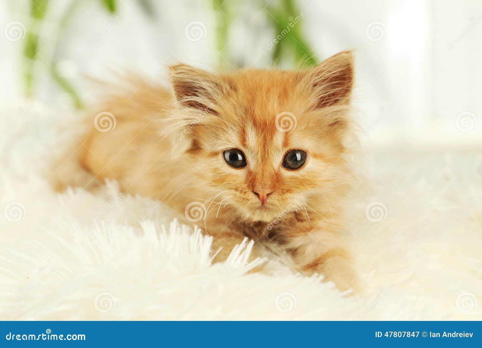 Kitten Redhead 84